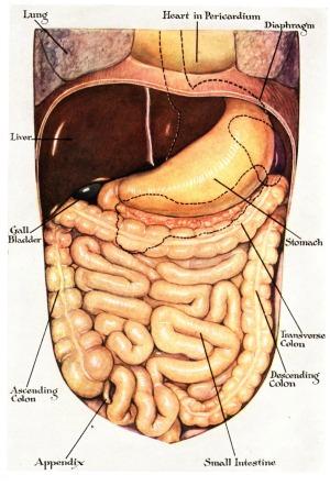 abdoninal bloating